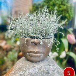 Vazonas -  su šukuosena